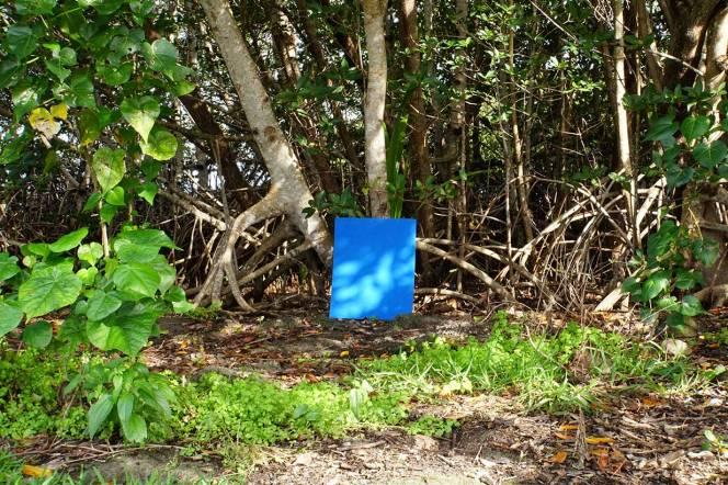 blue-rectangle-mangrove