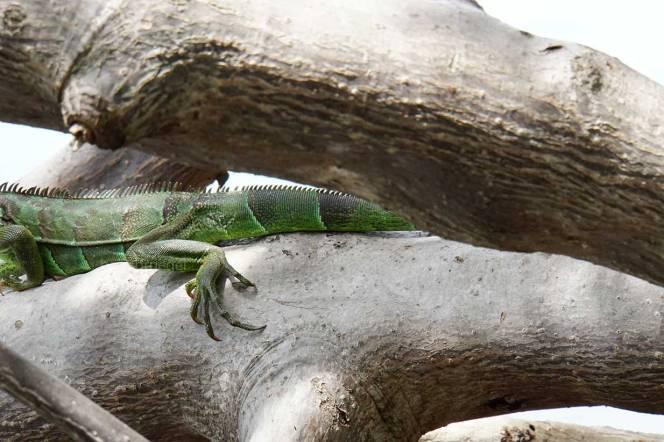 green-lizard-back-end