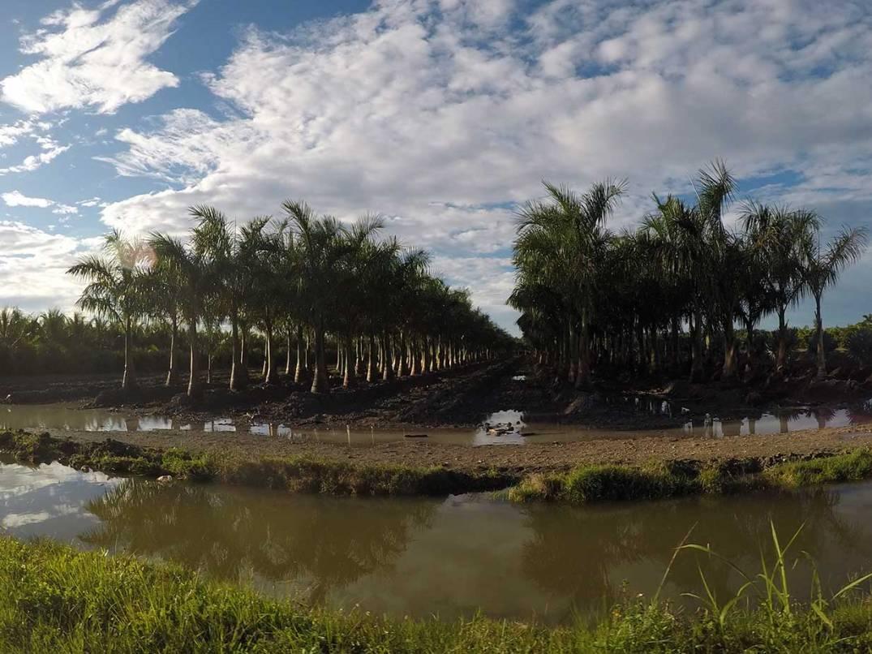 homestead-plantation