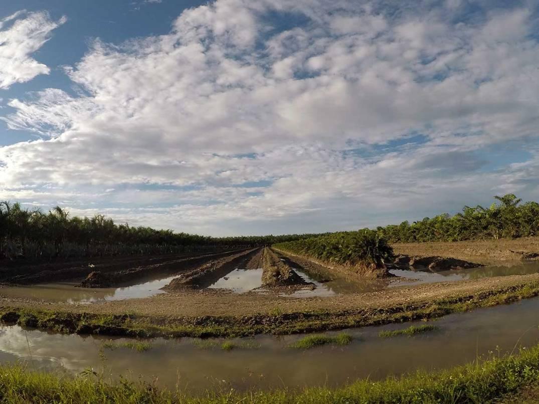 homestead-plantation2