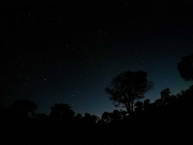 night-shy2