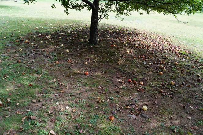 apples-paris-hill